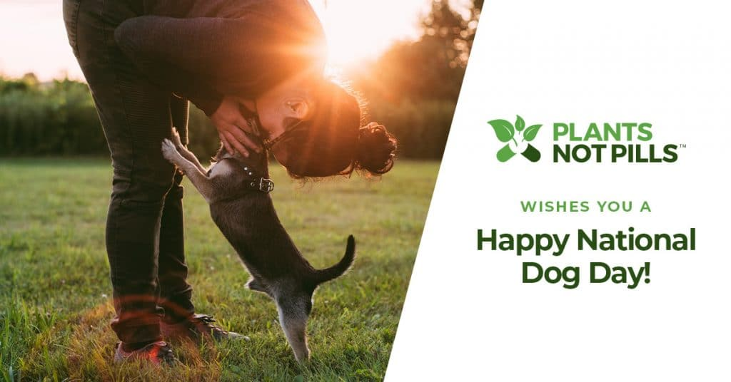 celebrate national dog day cbd for dogs